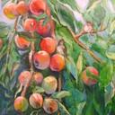 Apfelbaum (Öl auf Leinwand, 60x70, 2012)